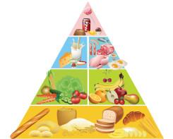 פירמידת המזון קאפה גודל 70-80